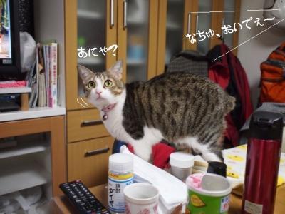 うちなー猫02