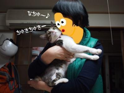 うちなー猫03