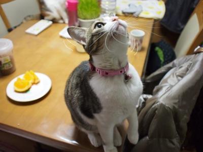 うちなー猫05