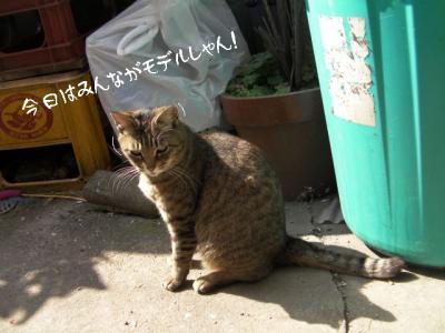 お外猫特集01