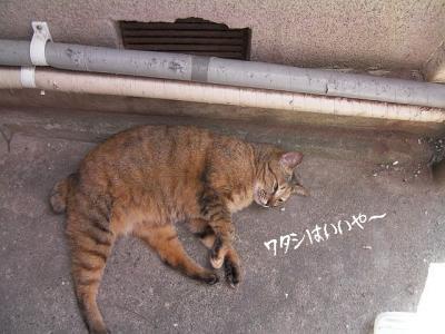 お外猫特集02