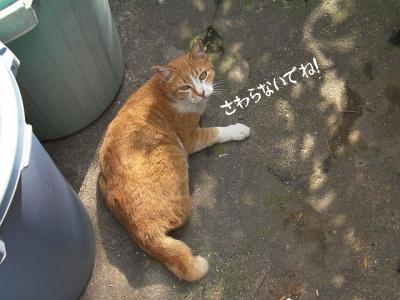 お外猫特集03
