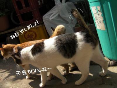 お外猫特集04