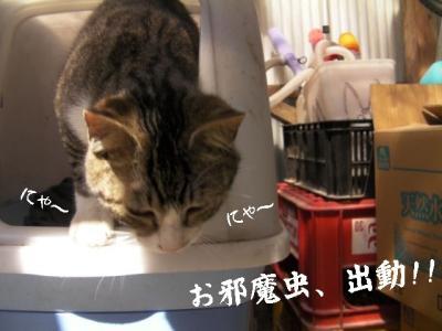 お外猫特集06