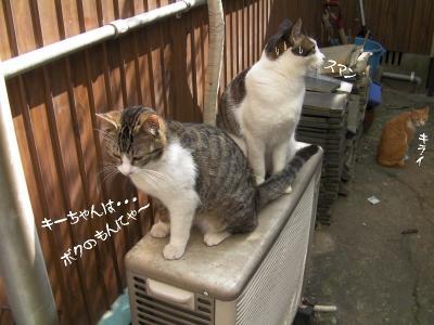お外猫特集07