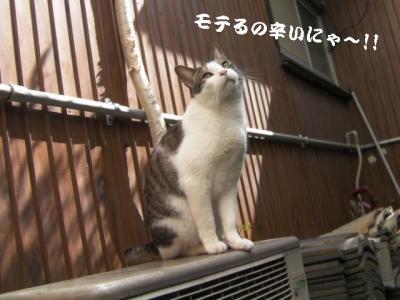お外猫特集08
