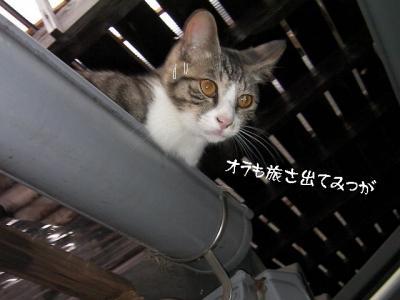 ぷち家出01