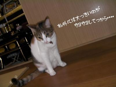ぷち家出02