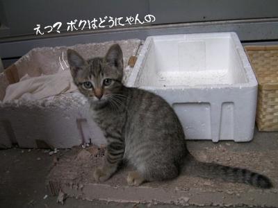 ぷち家出03