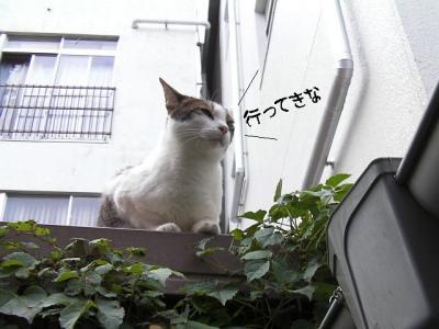 ぷち家出07