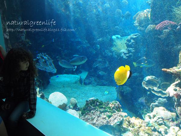 ヌメア散策 水族館