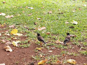 すずめっぽい鳥