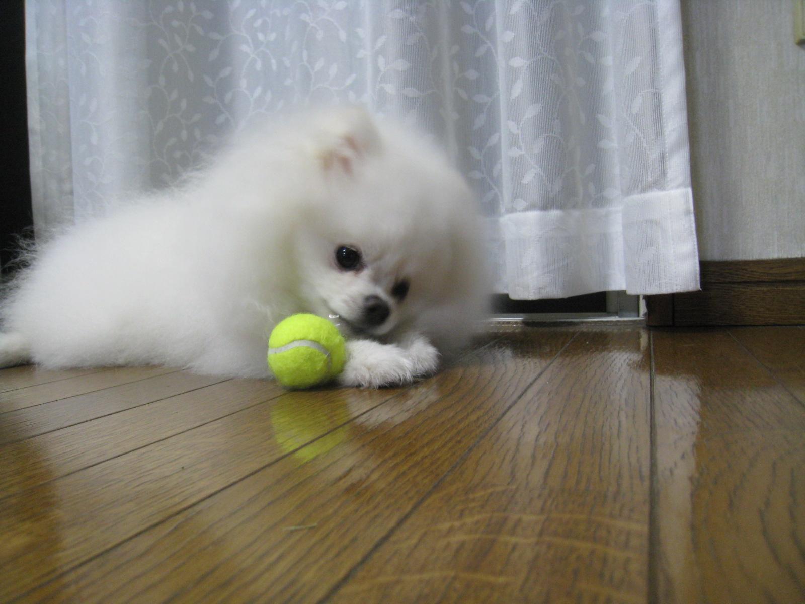 テニスボールミニ