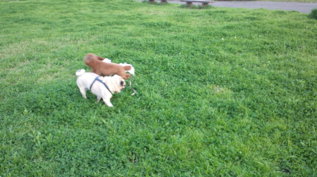 りょう芝生