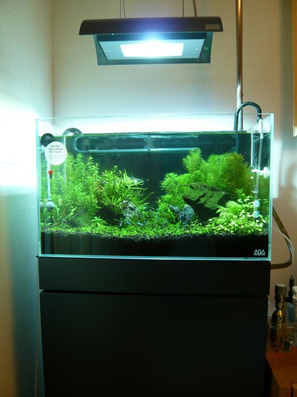 60センチ水草水槽