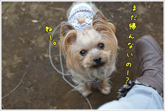 DSC_0050 (6)