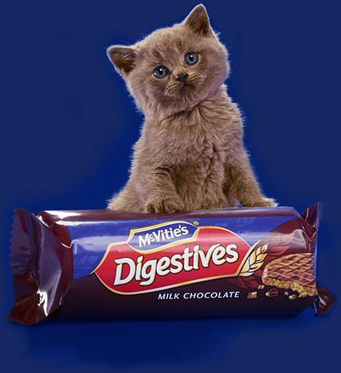 product_digestives_chocolate_top_image
