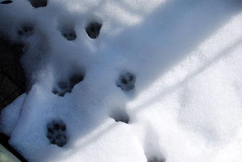 snow_021114