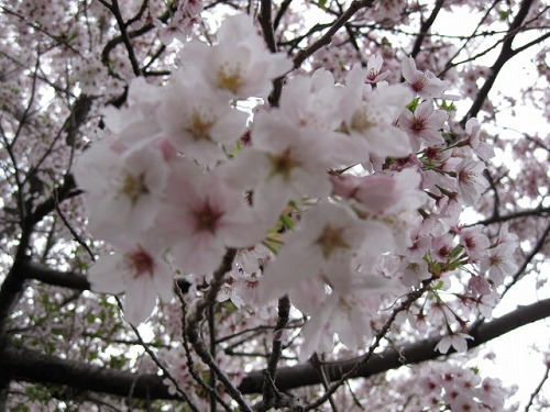 2012春 赤穂東御崎公園
