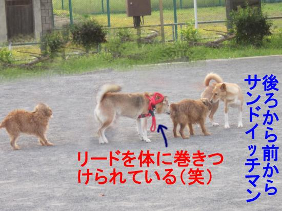 001-B_convert_20110930052707.jpg