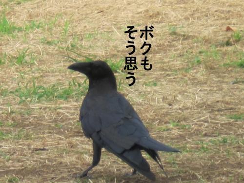 002-A_convert_20110923054335.jpg