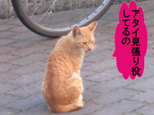 003_convert_20110919060357.jpg