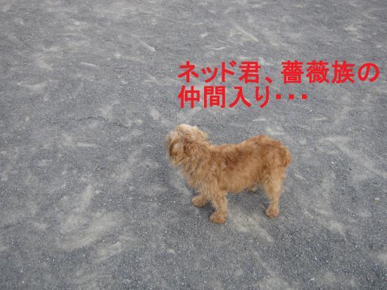 004-G_convert_20110928051202.jpg