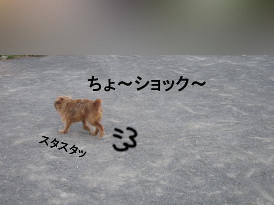 005-D_convert_20110928050741.jpg