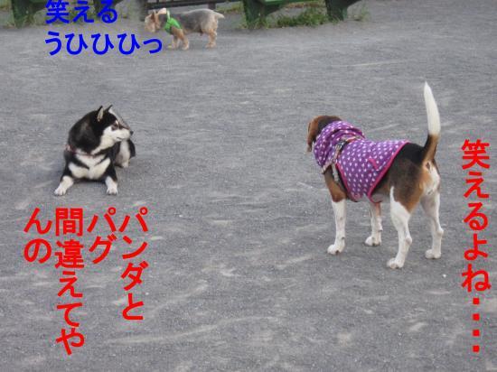 011-5_convert_20111001045735.jpg