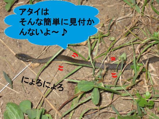 011-7_convert_20111002051113.jpg