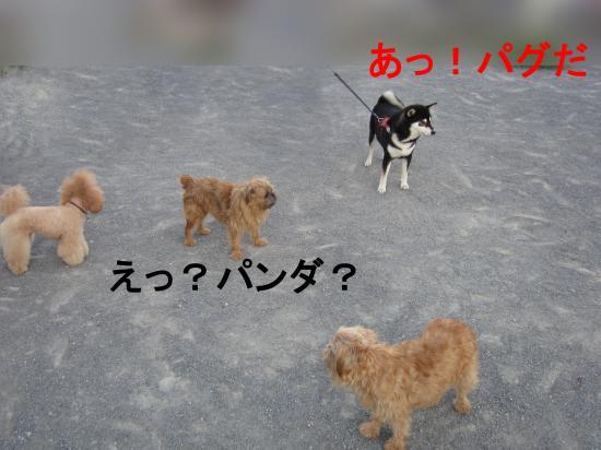 015-33_convert_20111001045651.jpg