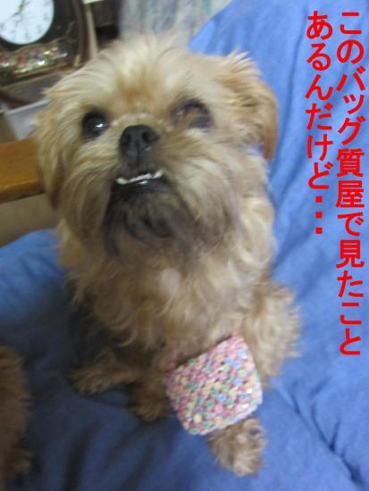 022-B_convert_20111008073225.jpg