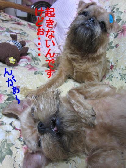 襍キ縺阪↑縺Юconvert_20111115015315