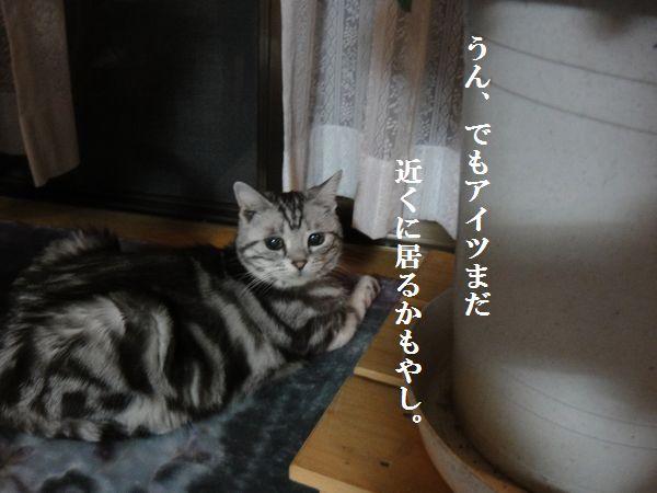 DSC07855.jpg