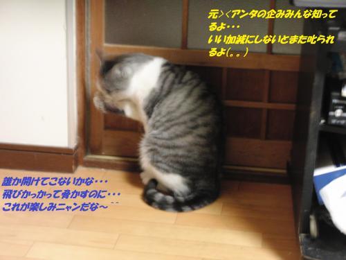 CIMG5523_convert_20131212094806.jpg