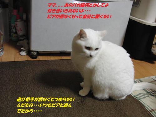 CIMG5525_convert_20131212094832.jpg