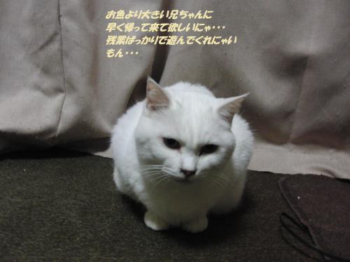 CIMG5531_convert_20131212094939.jpg