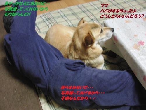 CIMG5532_convert_20131212095308.jpg