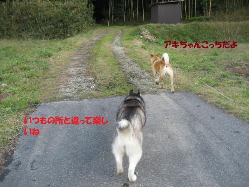 IMG_1559_convert_20131213080055.jpg