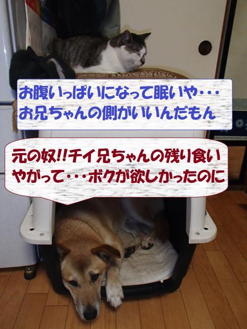 PC136213_convert_20131214061227.jpg