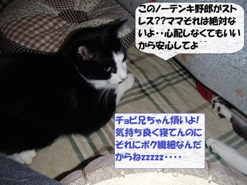 PC166257_convert_20131217075350.jpg