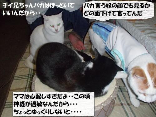 PC166259_convert_20131218074211.jpg