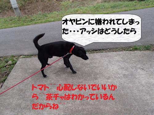 PC176264_convert_20131219055943.jpg