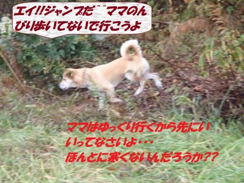 PC186270_convert_20131221081406.jpg