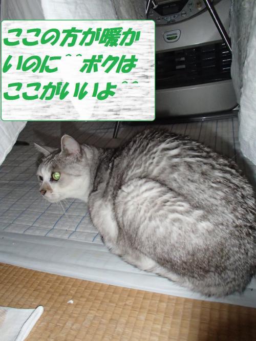 PC206291_convert_20131223071556.jpg