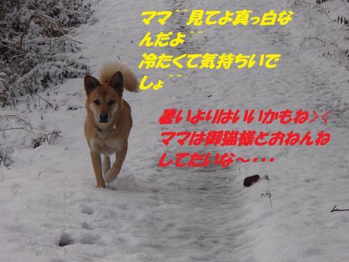 PC206295_convert_20131222082735.jpg