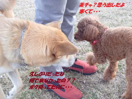 PC256351_convert_20131226075204.jpg