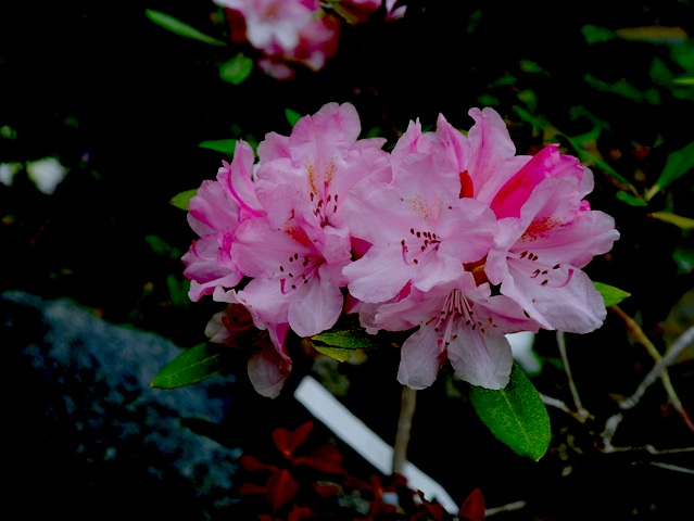 1304桃色集りのお花