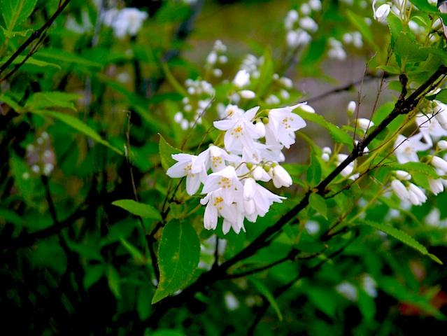1304白い小花