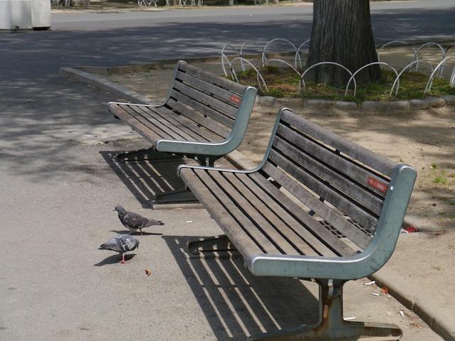 二つのベンチとハト